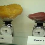 RETO ALBALÁ ADELGAZAR grasa-vs-musculo-700x500