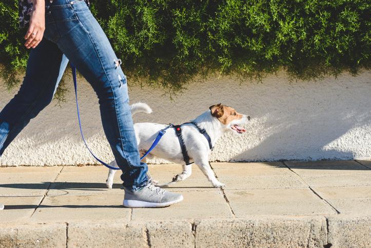pasear perro cuarentena coronavirus
